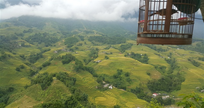 guide to sapa