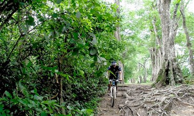 Cycling Tour around Angkor