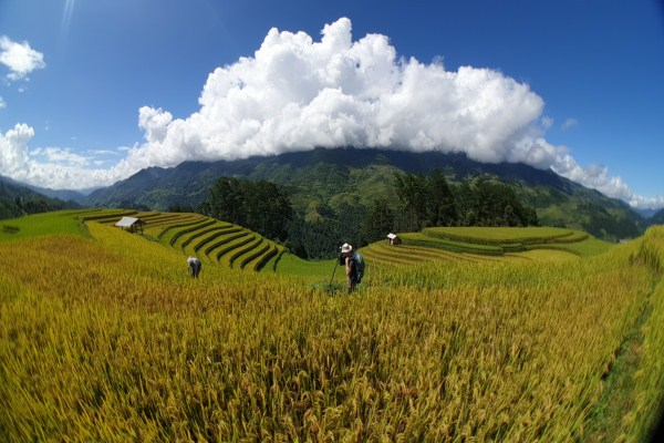 PT01: Rice Terraces and Ethnic Minorities in North Vietnam - 6 days / 5 nights