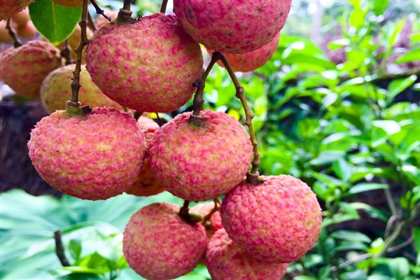 5 Exotic Fruits to Try In Vietnam