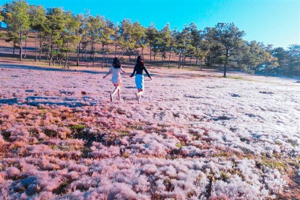 The Pink Grass Festival of the Central Highlands