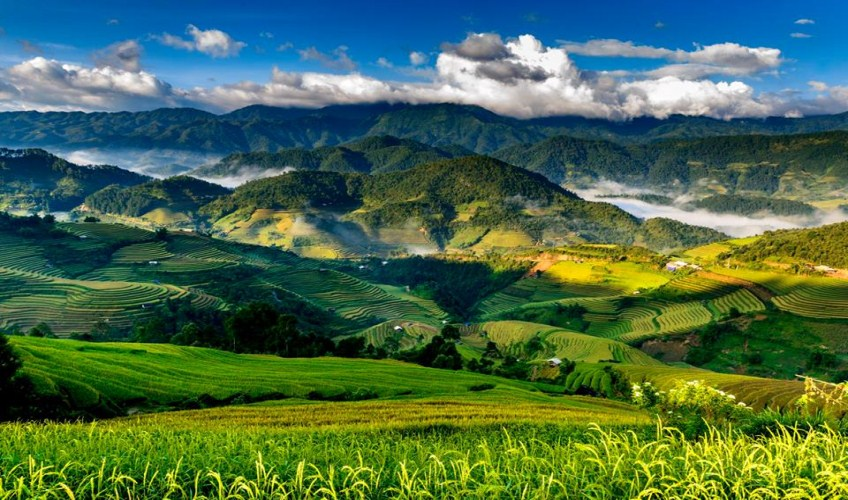 mu cang chai rice terraces in july