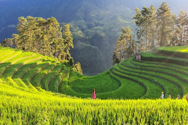 Mu Cang Chai terraced fields recognized as a special national heritage