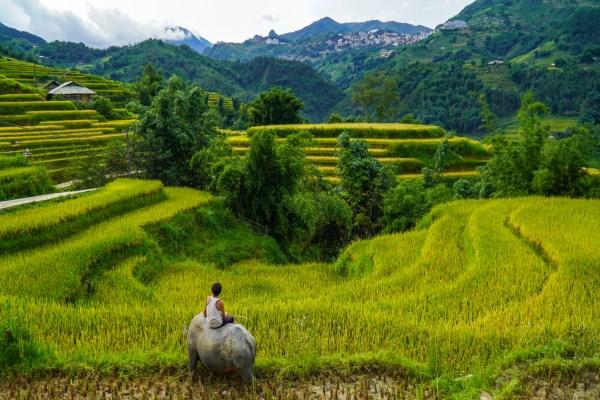 Vietnam, the safest tourist destination after Covid-19