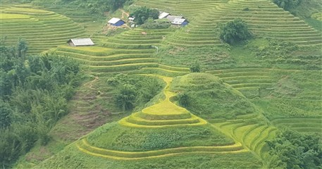 SP11: Amazing Sapa and Mu Cang Chai - 4 days / 3 nights