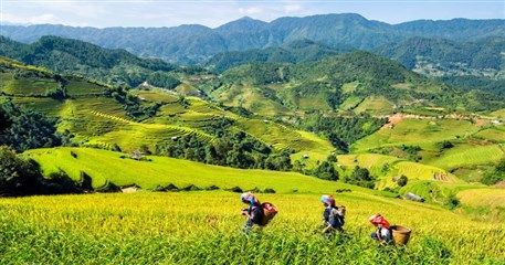 MVT07: Hanoi - Tam Coc - Sapa - Halong package - 8 days 7 nights