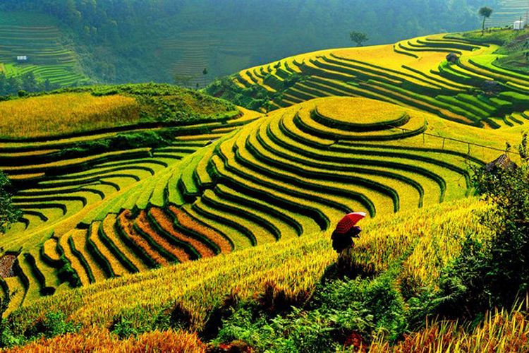 Best places to see amazing rice terraces in vietnam for What is terracing