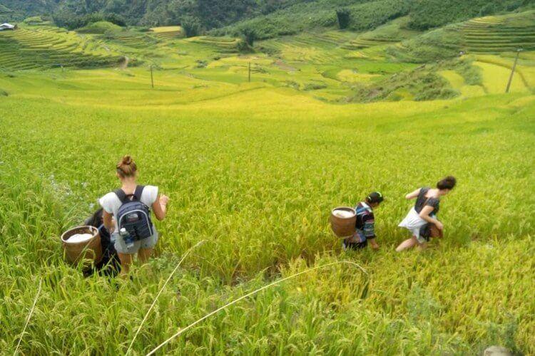 Top places for trekking in Vietnam