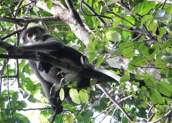 5 enjoyable experiences in Cat Tien National Park