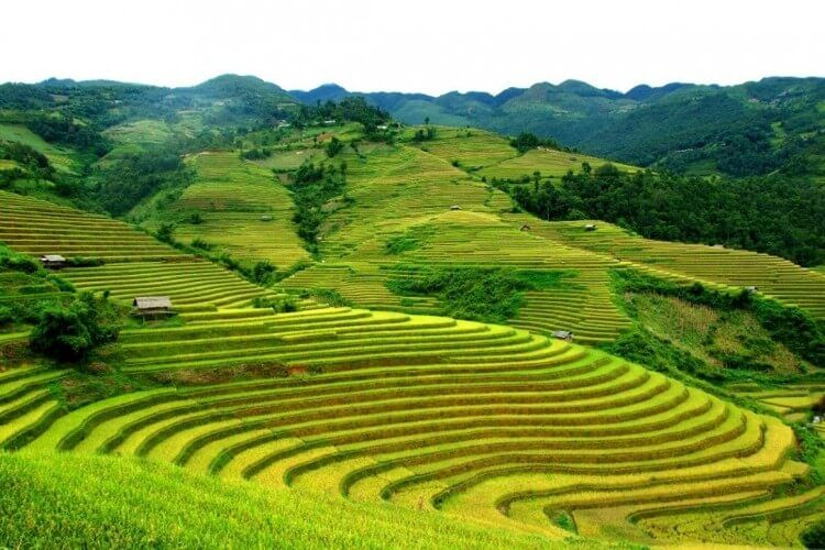 Explore the treasures and pleasures of Vietnam