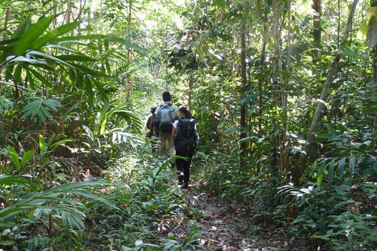 Trekking the Cardamom Mountains