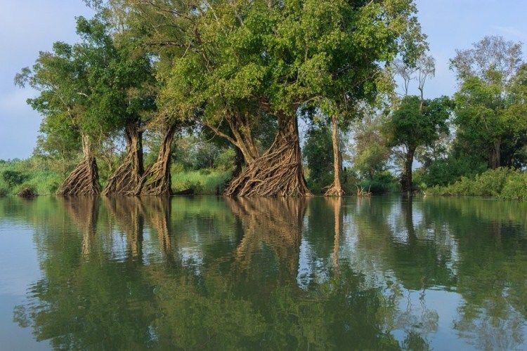 Ramsar of Cambodia's Mekong River