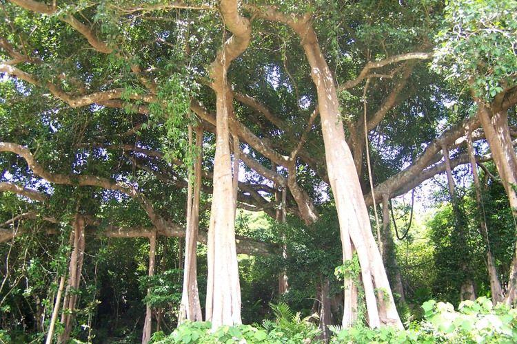 Ba Na Nui Chua Nature Reserve