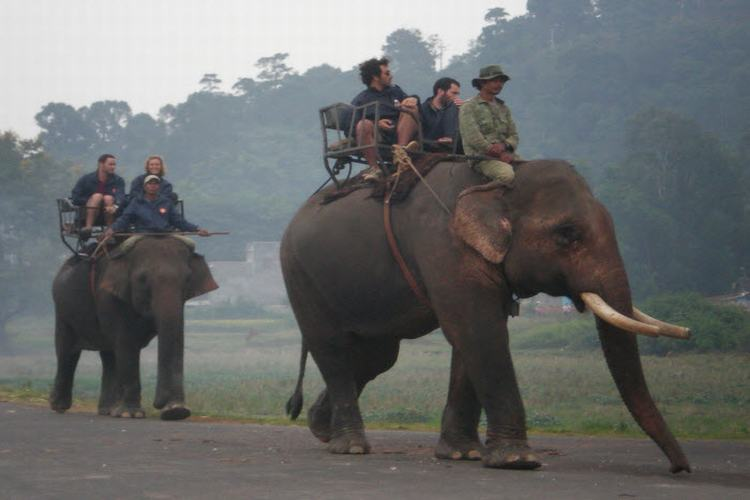 Elephant and Ostriches Ride