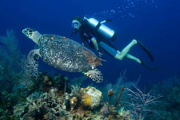 Diving, snorkelling and boat trips in Phu Quoc island in Vietnam tour