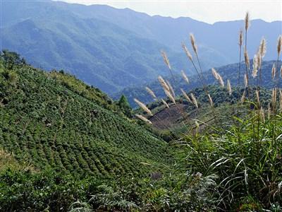 Phongsaly Laos Destinations